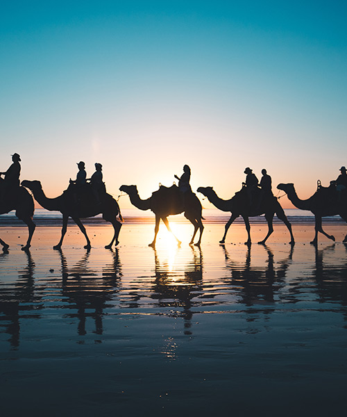 cable beach broome camel sunset tour